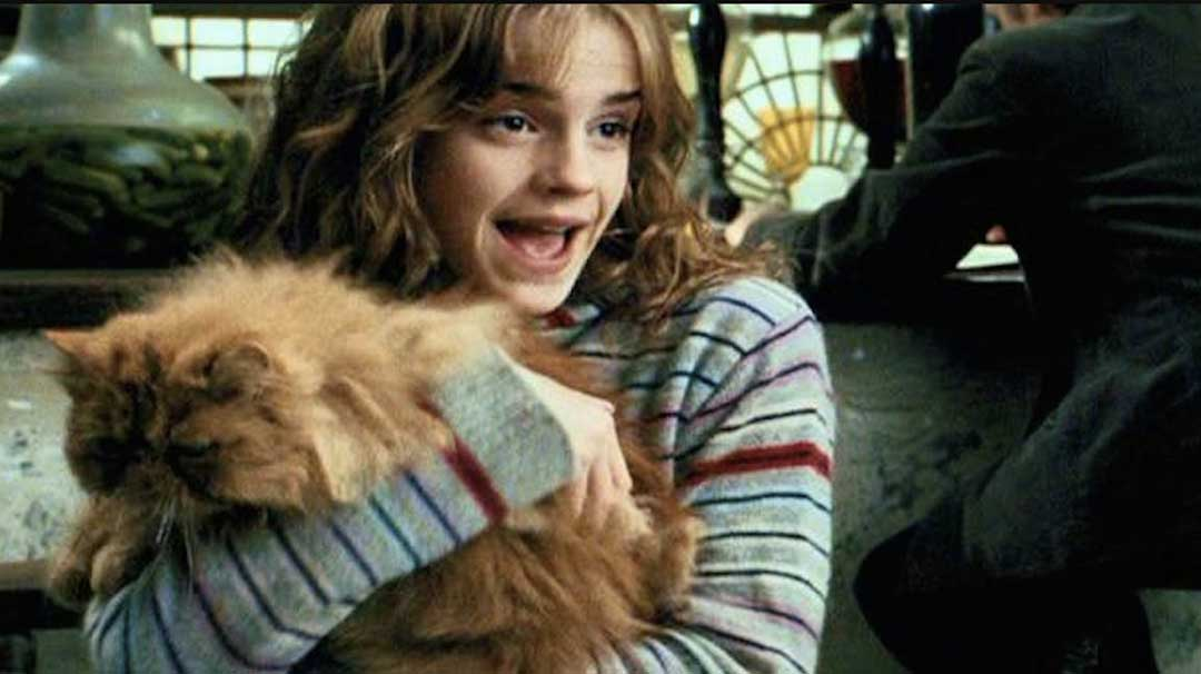 Image for #1. Los padres de Hermione son muggles.
