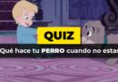 Quiz · Perro