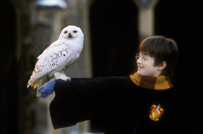 Harry Potter y la Piedra Filosofal • Warner Bros